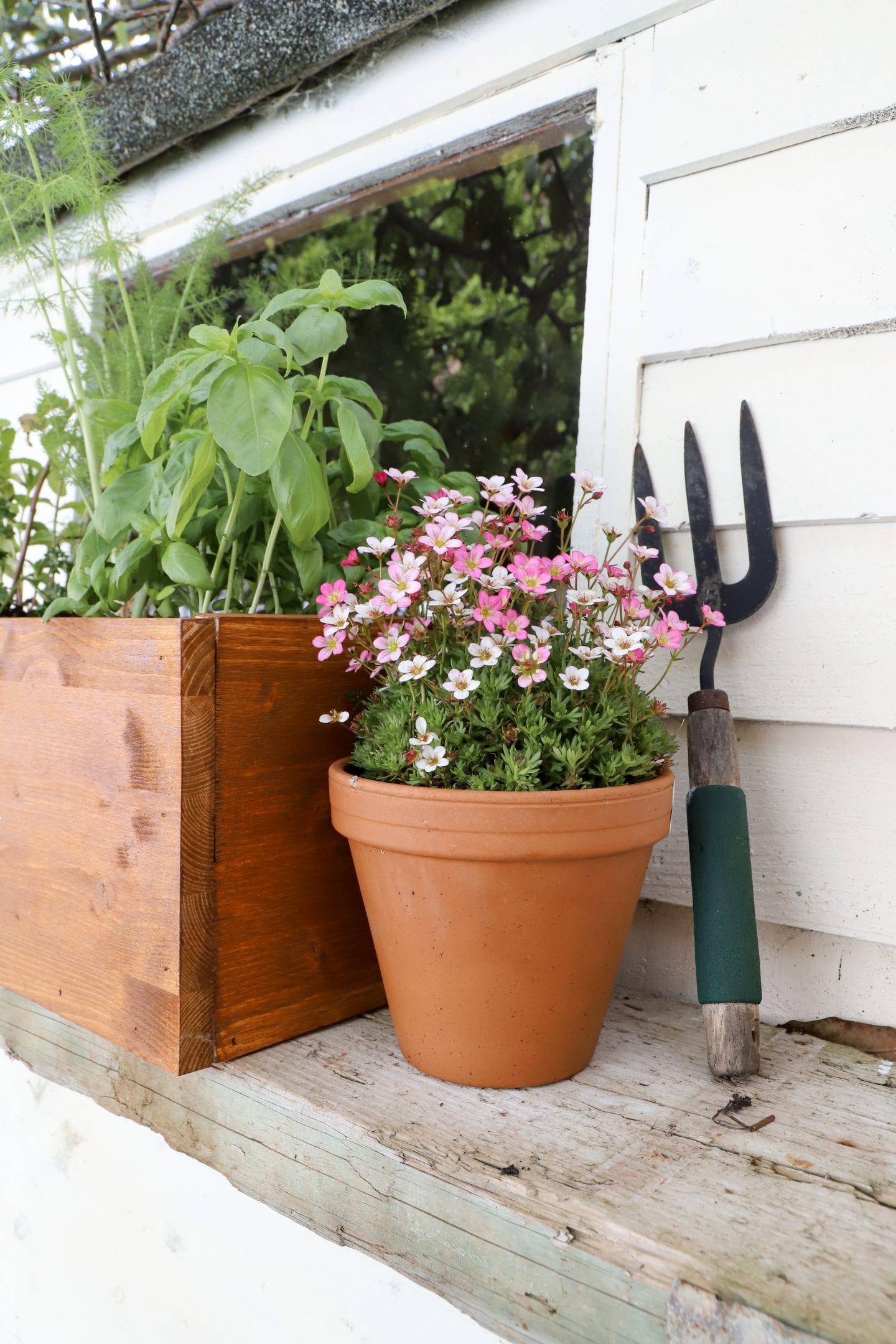 Peat free compost Ireland